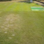 スクラム、コウライ芝の擦り切れ比較 – 独自開発天然芝【スクラム】