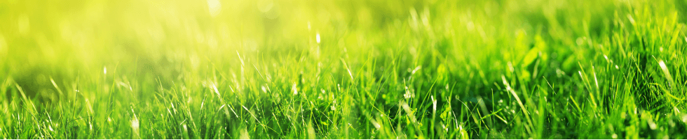 免責事項 - 環境設計やランドスケープに関わる研究開発企業 | 天然芝 屋上緑化システム | 海水化学工業株式会社